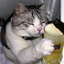 CatKiller